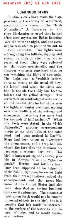 1911 - Luminous owls again.jpg