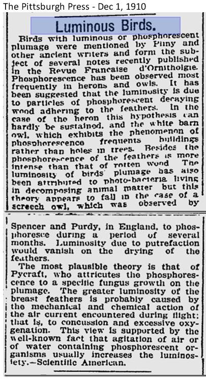 luminous birds 1910.jpg