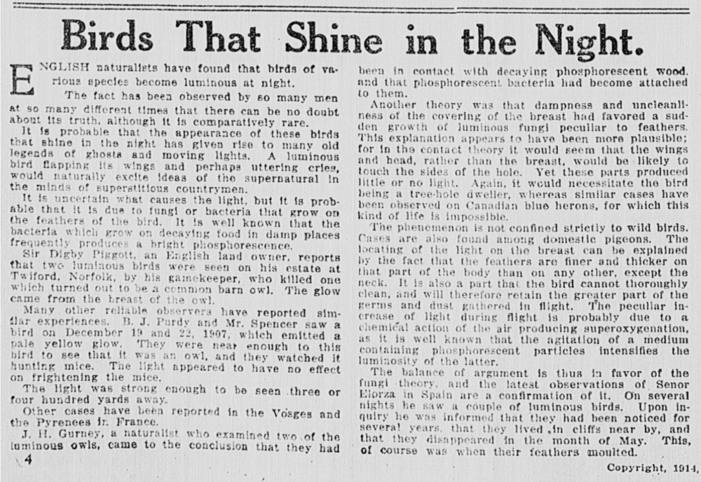 1914 Birds that Shine in the Night--Times Dispatch _Richmond, Va _ 1903-1914, Sun January 18, 1914, Image 46.png